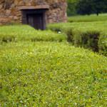 Hedge Labyrinth #2