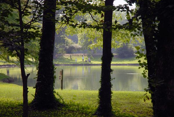 Pond & Shade